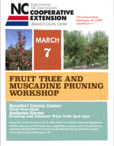 Cover photo for Fruit Tree and Muscadine Class and Pruning Workshop