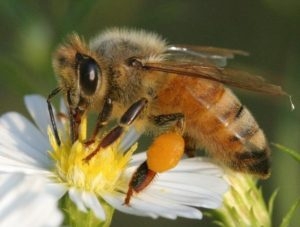 Cover photo for 2019 Bee School Registration - Beaufort County Beekeepers Association