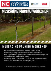 Cover photo for Muscadine Pruning Workshop