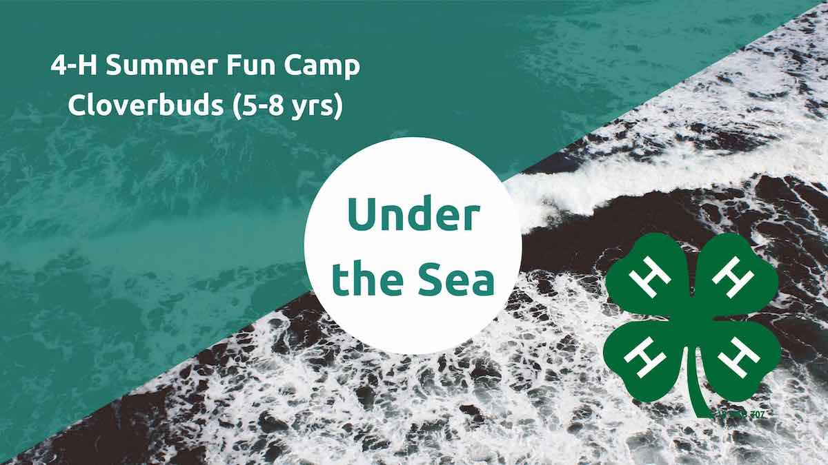 Under the Sea flyer image